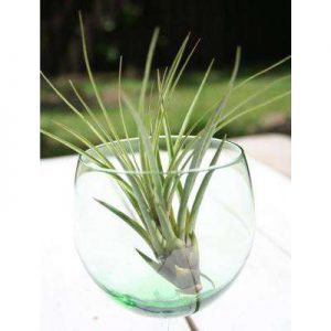 Waypoint Wednesday- DIY Air Plants @ The Waypoint