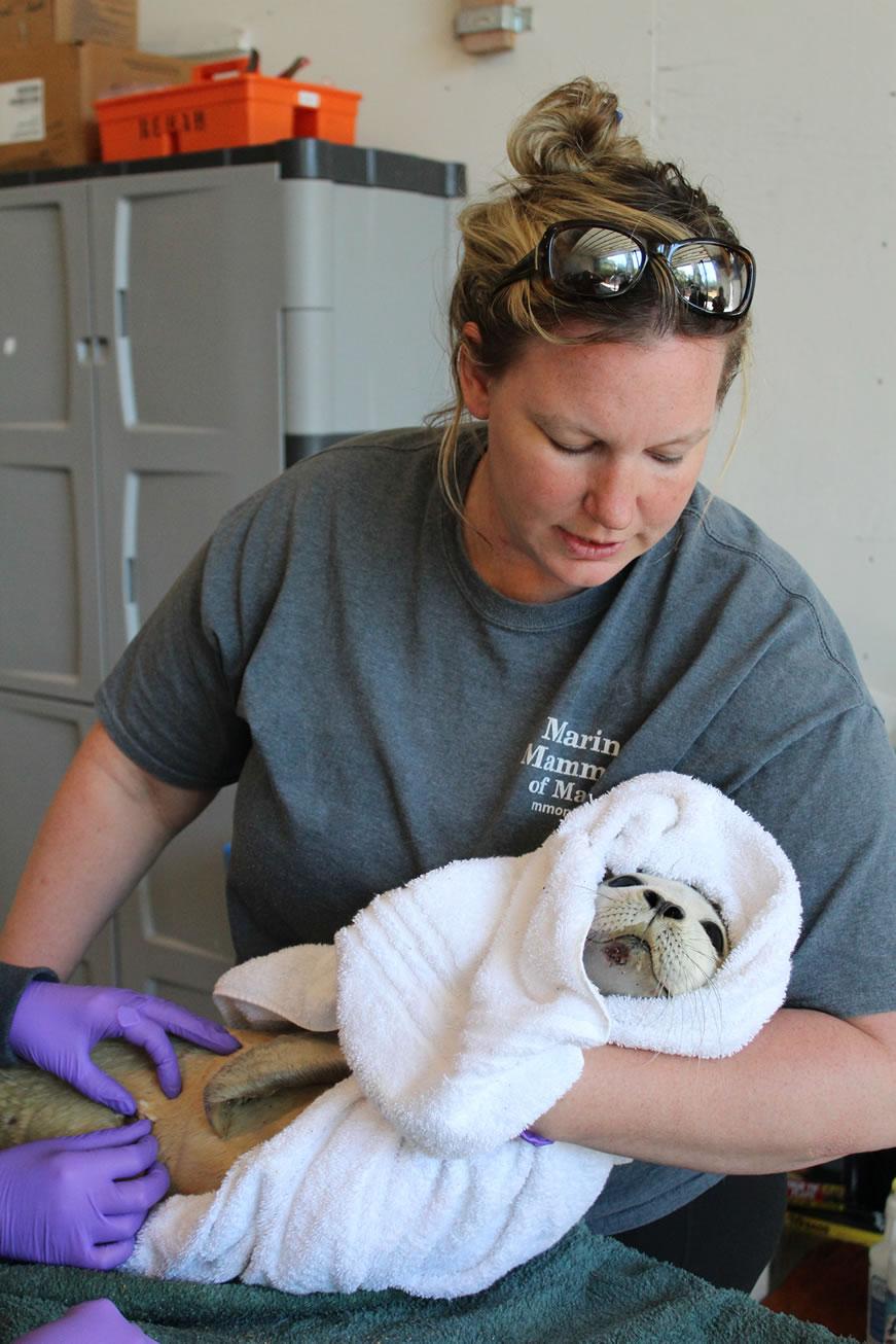 Lynda Doughty '08, Executive Director, Marine Mammals of Maine